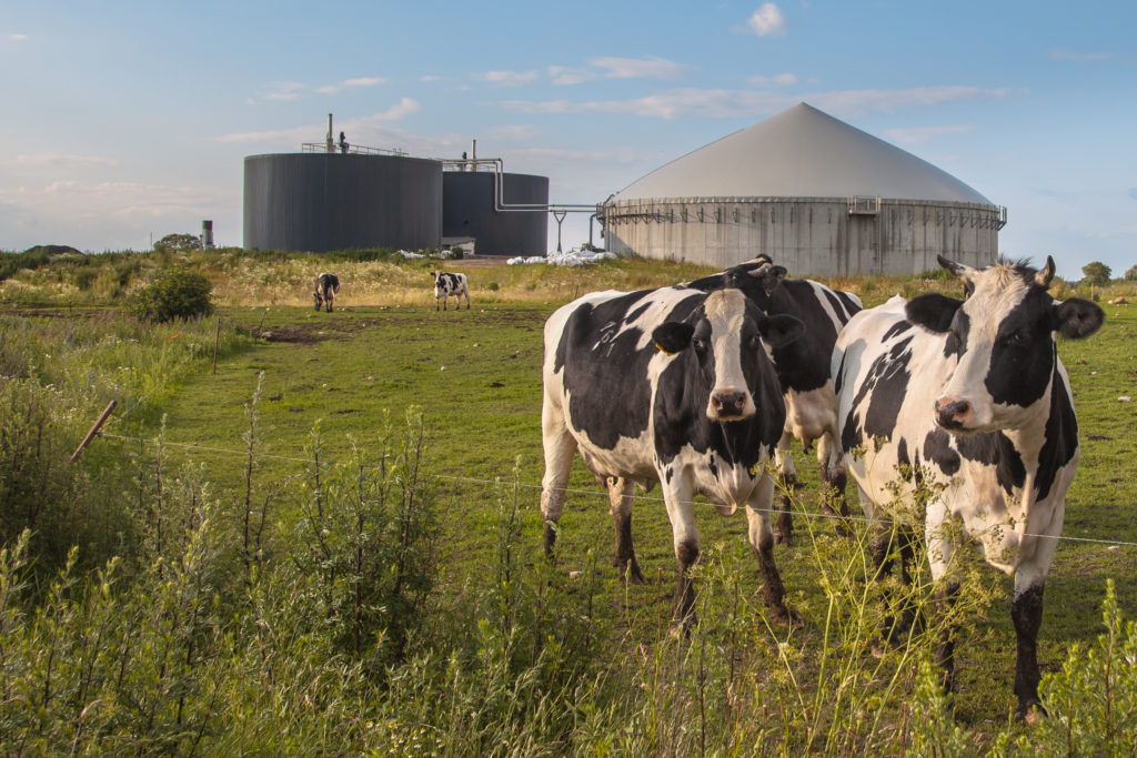 a cow pasture with cows with foreground and in the background is a biogas plant
