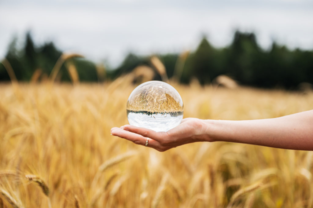 Крупный план женской руки, держащей прозрачный хрустальный шар перед пшеничным полем из желтого золота